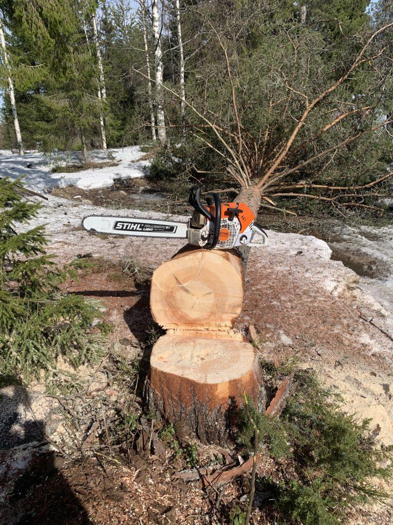 Nedsågat träd